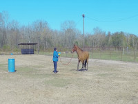 Individual horsemanship clinic success!