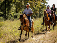 Trail Horse Riding PFHA TRAIL HORSE TEST GROUNDWORK