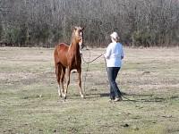 Disrespectful Stallion has a change of attitude!