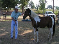 Private horsemanship lessons - valuable investment