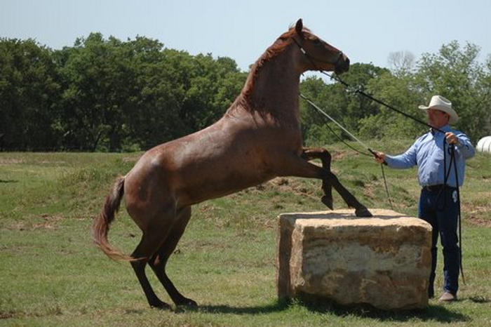 keith andries horse training clinics