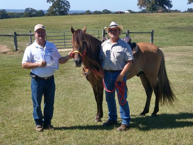 Senior Trail Horse title awarded to A Cappella's Mesteno