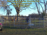 Cowboy Mounted Shooting mini clinic with a Paso Fino